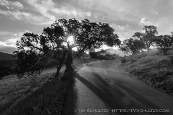 Lone Oak, Figueroa Mountain-Black and White # 2