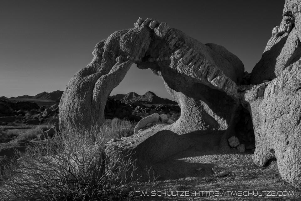 Dinosaur Window, Black and White by T.M. Schultze