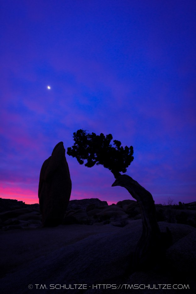 Juniper and Monolith, Twilight