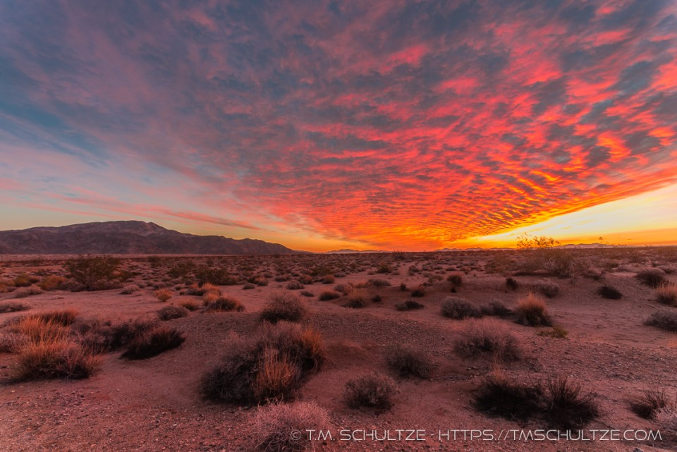 Sunrise Over Turkey Flats, Joshua Tree