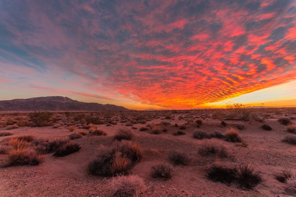 Sunrise Over Turkey Flats, Joshua Tree