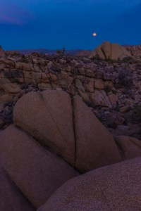 Christmas Eve Moonrise Joshua Tree