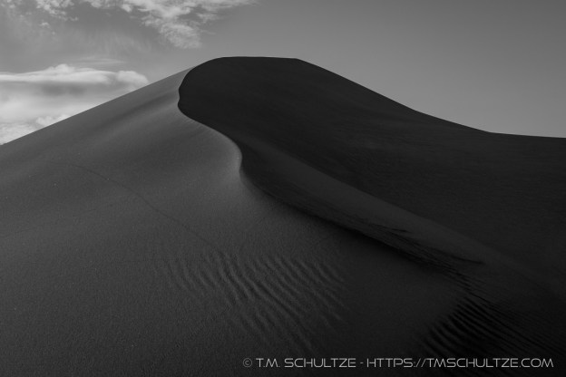 Beetle Tracks, Black and White, by T.M. Schultze