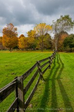 Hale Farm Fence-line, Fall Color