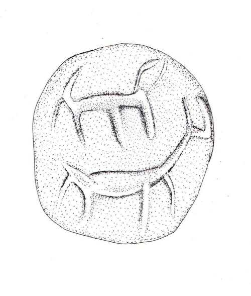 Drawing of the Seal (Razia Richman)