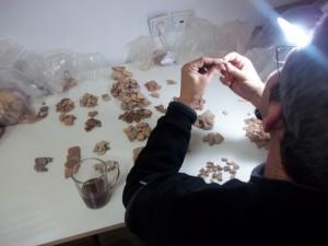 פרץ ראובן ממיין חרסים במעבדה