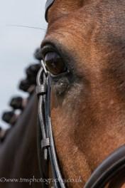 Equine photography-2
