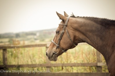 Looking on_Throroughbred