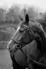 EquinePhotography-0188EquinePhotoshoot_tmsphotography