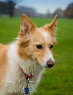 Dog Photography-22-1