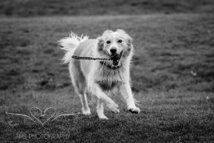 Dog Photography-25-1