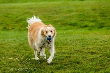 Dog Photography-26-1