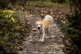 Dog Photography-50-1