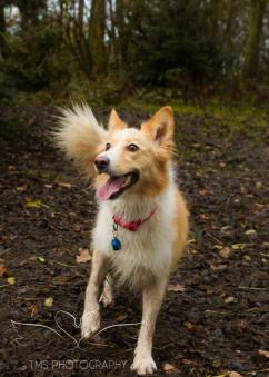 Dog Photography-65-1