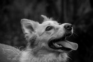 Dog Photography-71-1