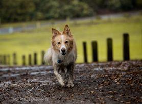 Dog Photography-74-1
