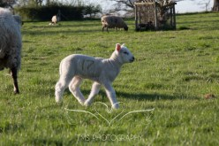 equinephotography_Derbyshire-29