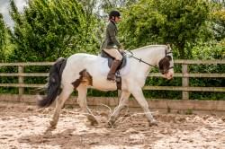 Equine_Photography_DerbyshireTMSPhotography-27
