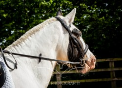Equine_Photography_DerbyshireTMSPhotography-8