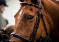 equineeventsphotographer_warwickshire-23
