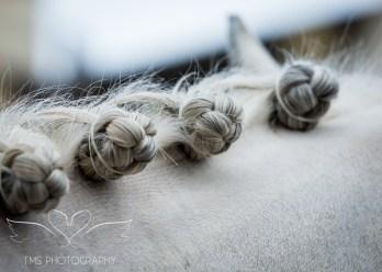 equineeventsphotographer_warwickshire-54