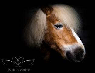 equinephotographer_Derbyshire-14
