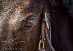 equinephotographer_Derbyshire-6