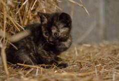 Kittens_photos (2 of 21)