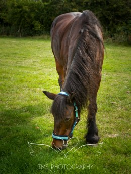 equinephotographer_Leicestershire-17