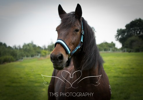 equinephotographer_Leicestershire-39