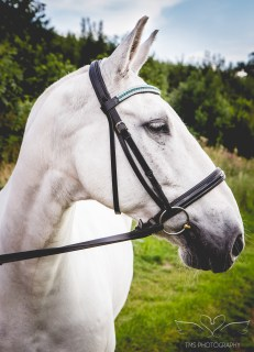 equine_photographer_Derbyshire-11