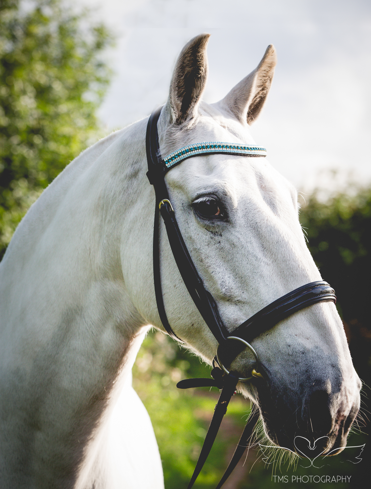 equine_photographer_Derbyshire-36