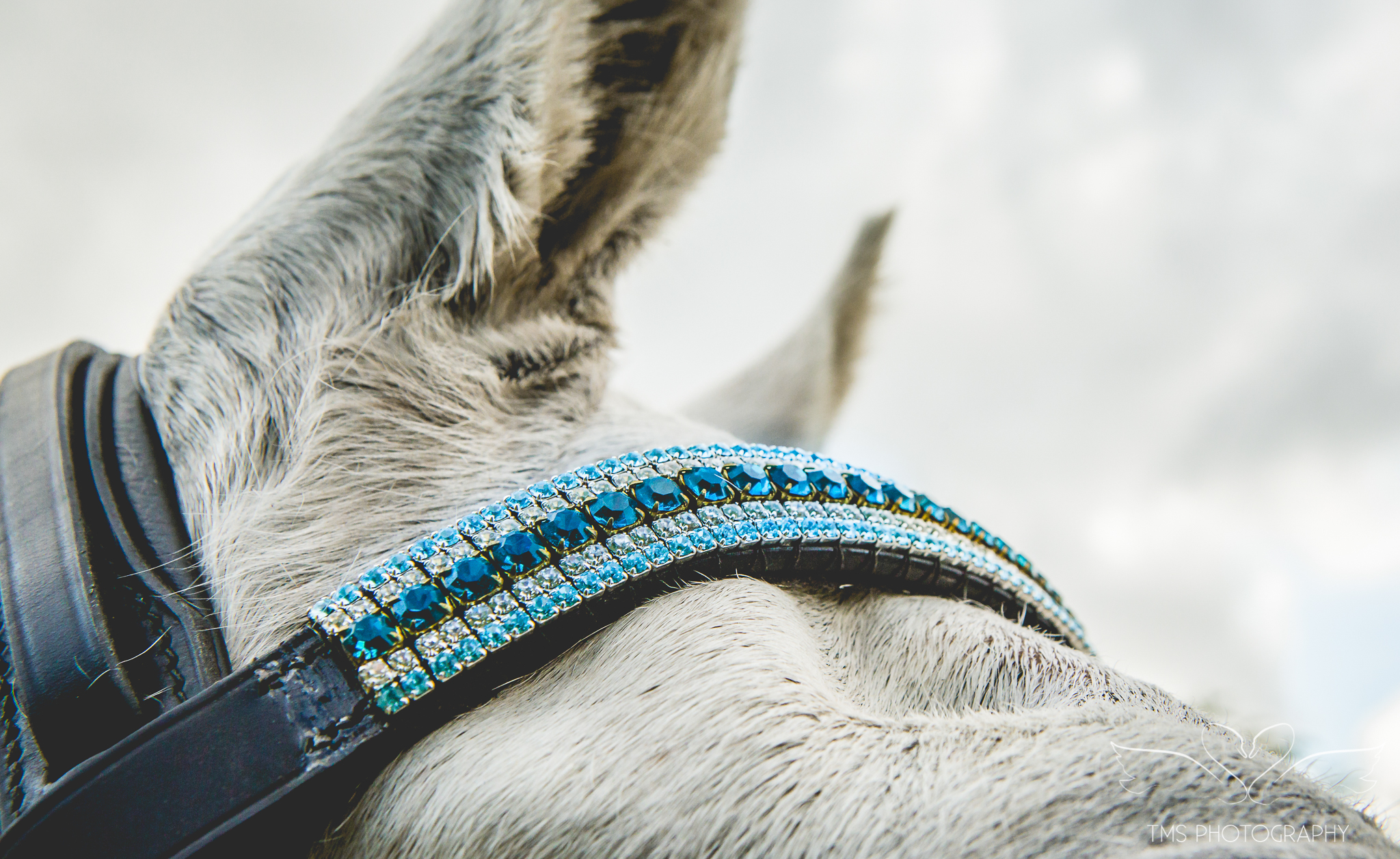 equine_photographer_Derbyshire-9