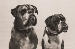 dog_photographer_derbyshire-15