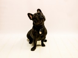 dog_photographer_leicestershire-18