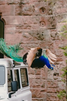 wedding_photogrpahy_peckfortoncastle-104