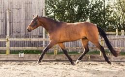 Horse_photographer_Derbyshire-14
