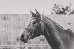 Horse_photographer_Derbyshire-17