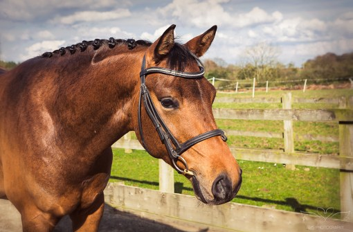 Horse_photographer_Derbyshire-20