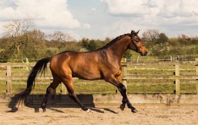 Horse_photographer_Derbyshire-22