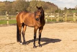 Horse_photographer_Derbyshire-29