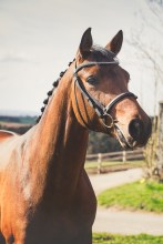 Horse_photographer_Derbyshire-3