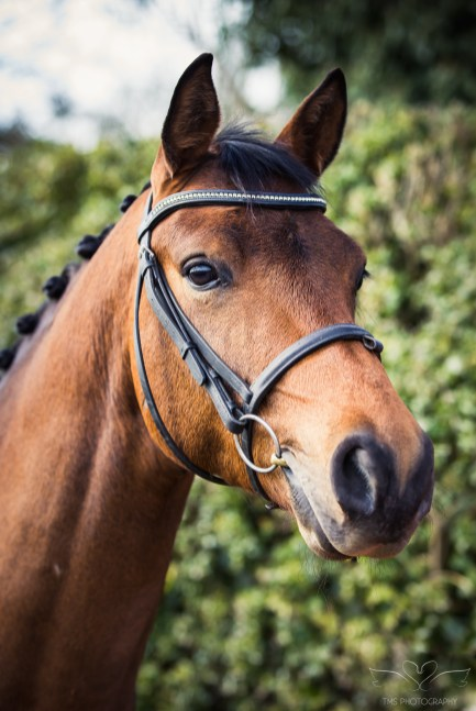 Horse_photographer_Derbyshire-6