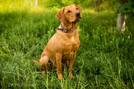 Dog_photographer_Derbyshire-11