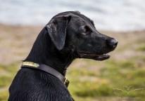 Dog_Photographer_Derbyshire-13