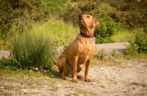 Dog_photographer_Derbyshire-20