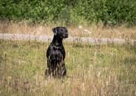 Dog_Photographer_Derbyshire-23