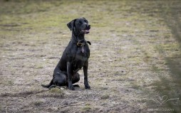 Dog_Photographer_Derbyshire-29