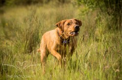 Dog_photographer_Derbyshire-31