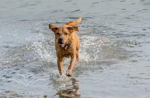 Dog_photographer_Derbyshire-35
